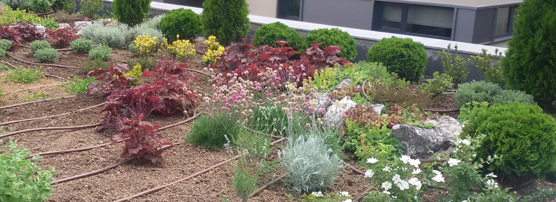 Полагане на тревен чим и изграждане на зелен покрив