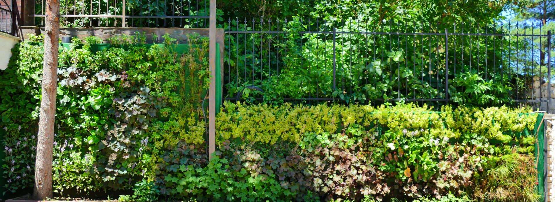 Живи зелени стени