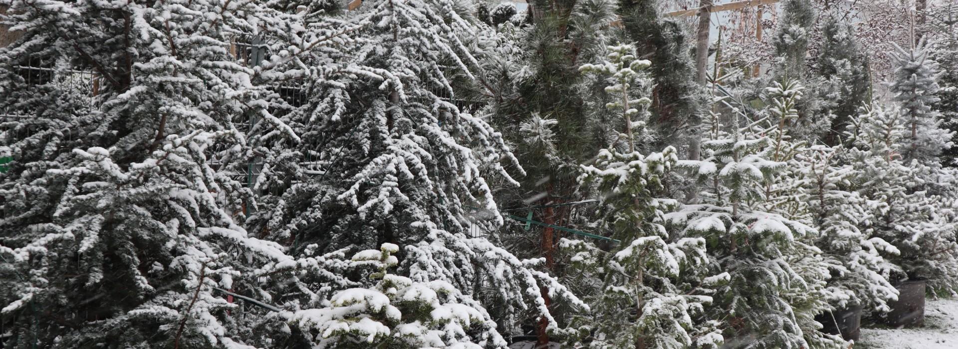 Снегопочистване - сезон 2019/2020