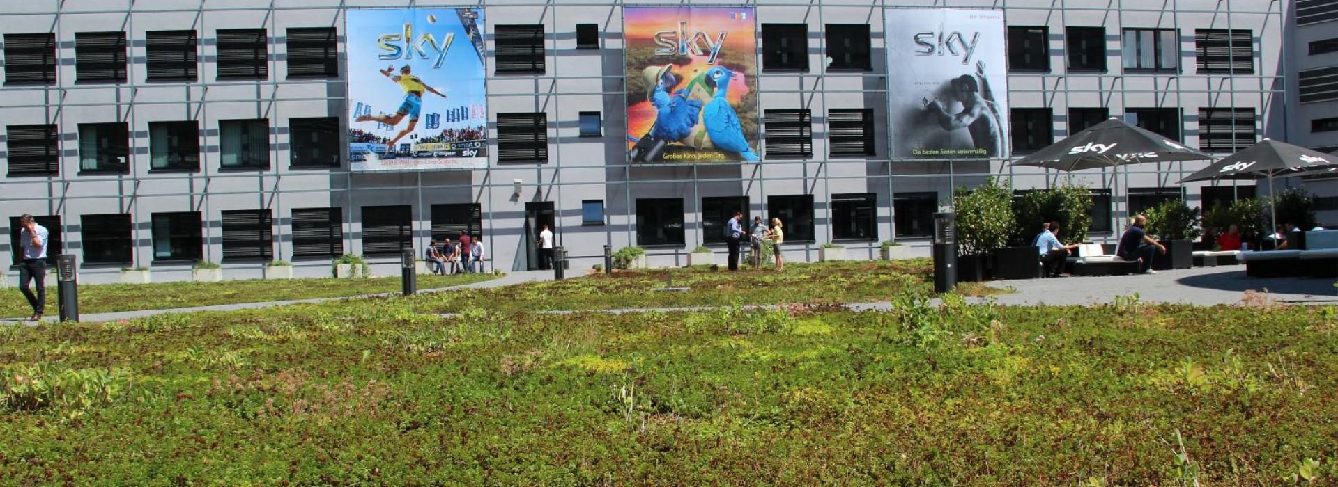 Екстензивни зелени покриви