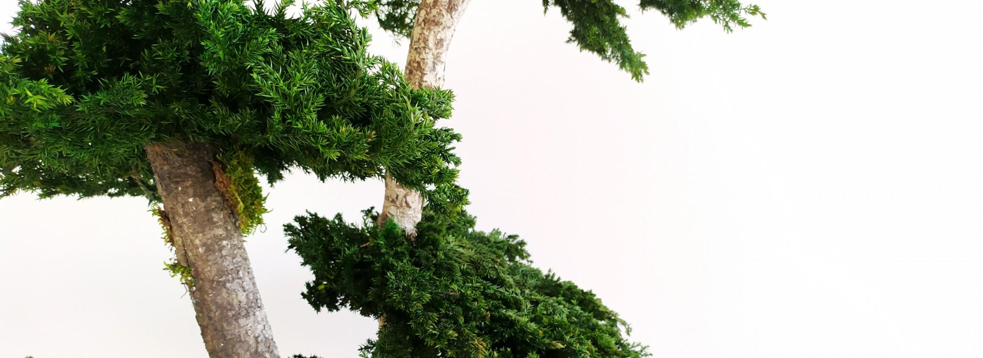 Стабилизирани растения