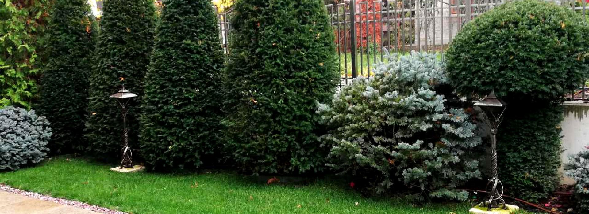 Озеленяване на двор , частен имот