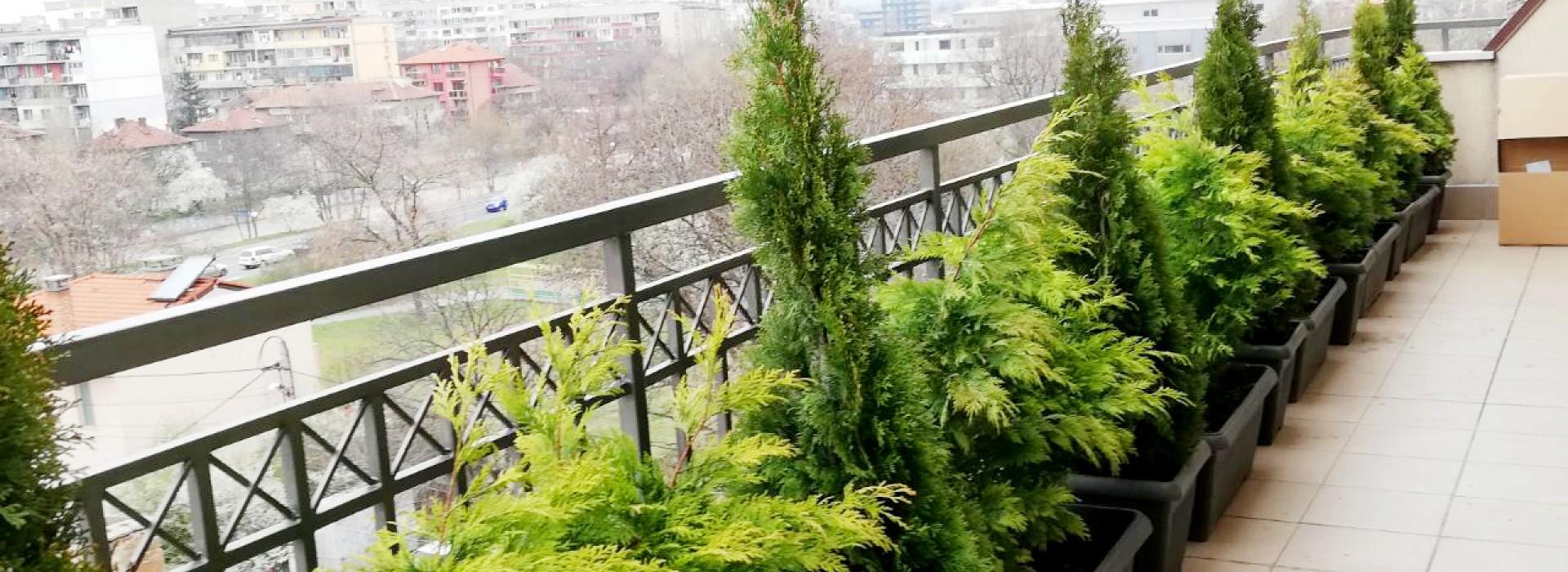 Озеленяване на тераса, частен обект