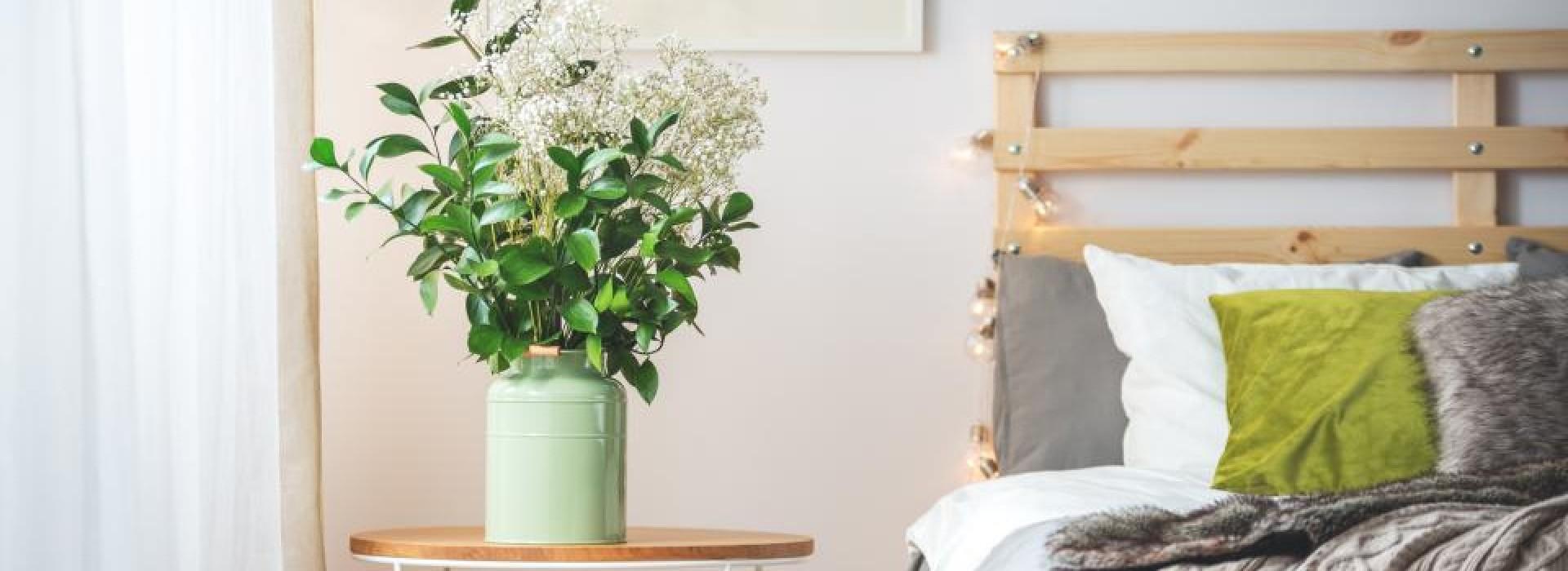 Растенията , които подобряват съня !