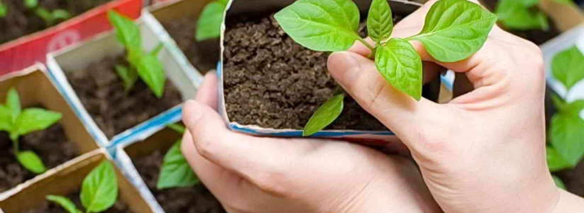 Януари - засаждане и размножаване на растения