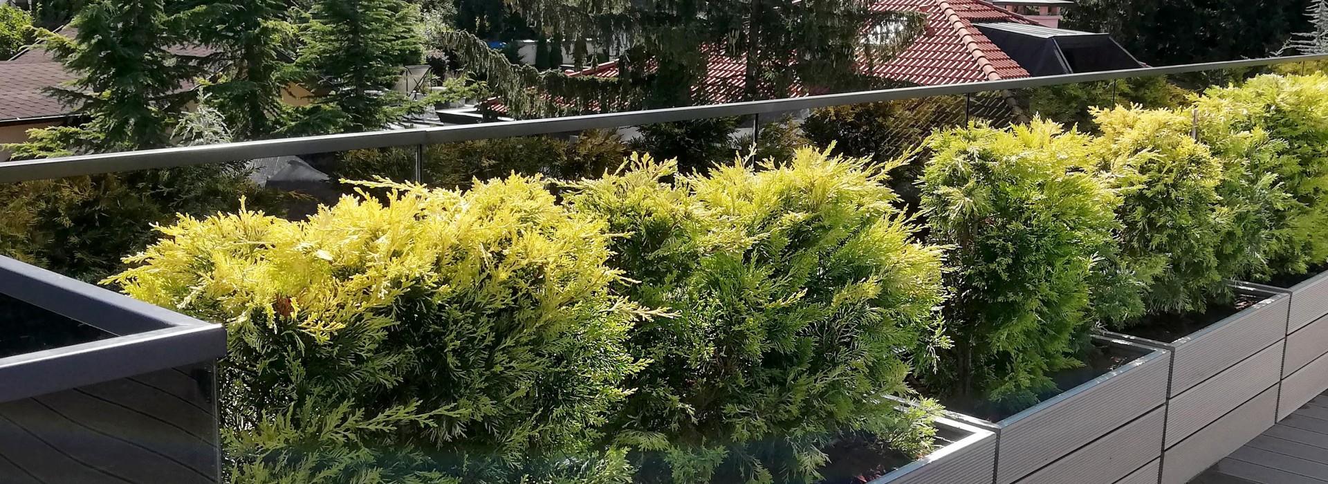 Озеленяване на покривна тераса - частен обект