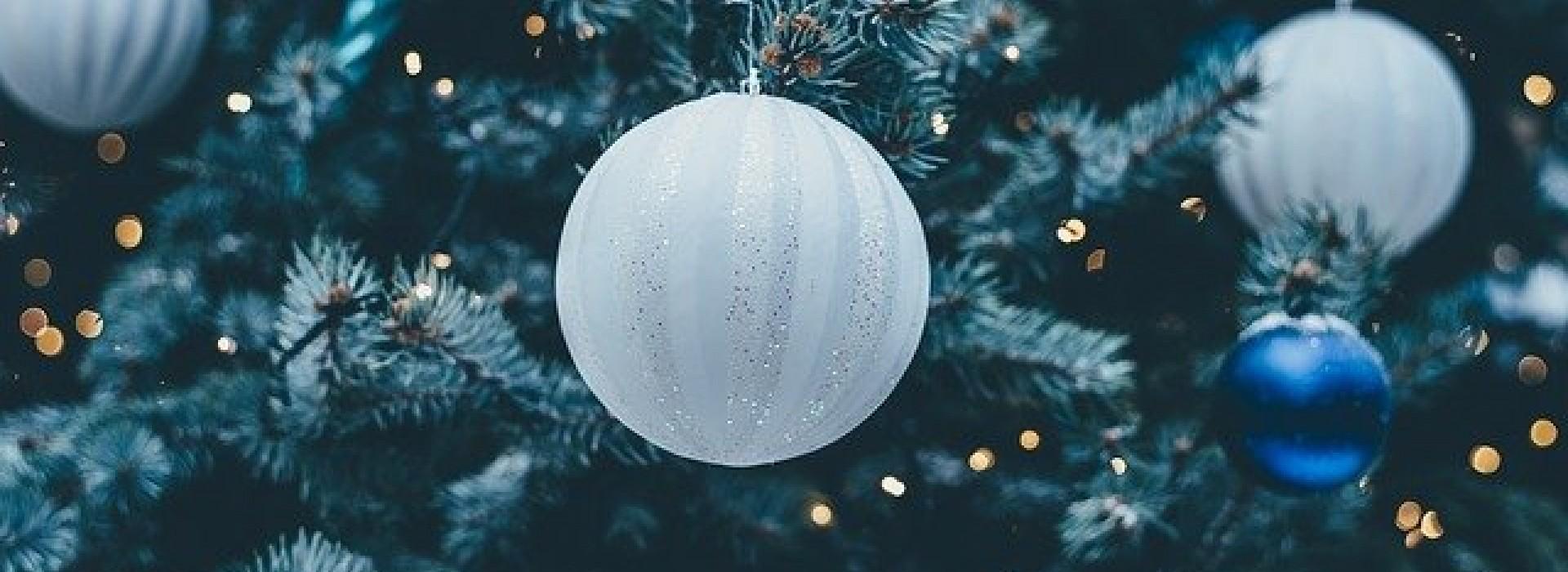 Защо да купим по-рано живо дръвче за Коледа?